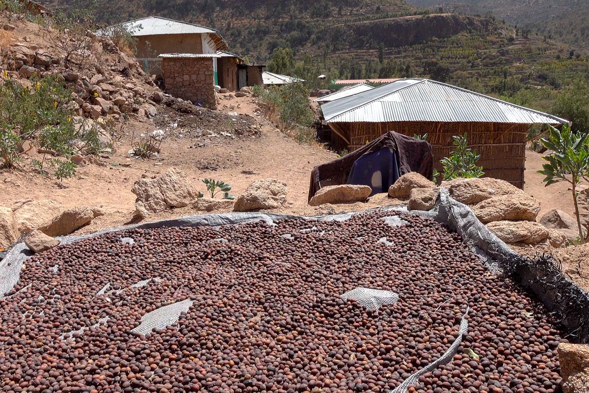 Ethiopia-coffee-harar-vilage-people-adventuresinethiopia