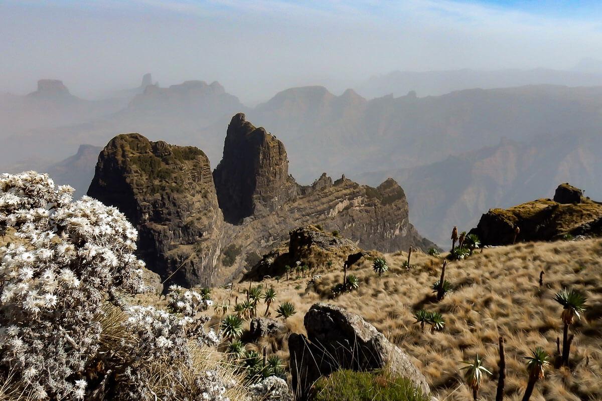 Simien-mountain-national-park-treking-rock-flowers-gigant-lobelia-blue-skay-ethiopia-adventuresinethiopia