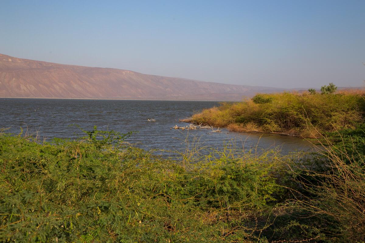 afar-region-awash-river-crocodiles-acacia-lake-ethiopia-adventuresinethiopia