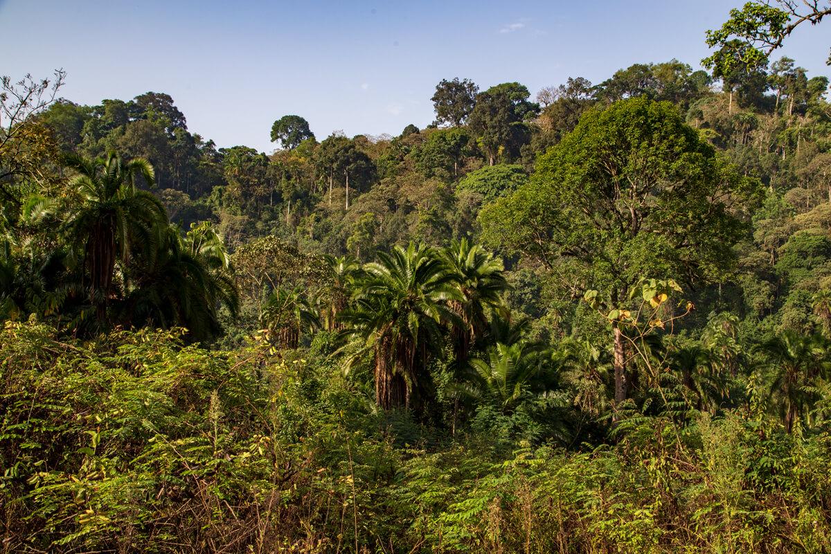 bonga-kafa-biosphere-reserve-region-treking-tours-caffee-ethiopia-adventuresinethiopia