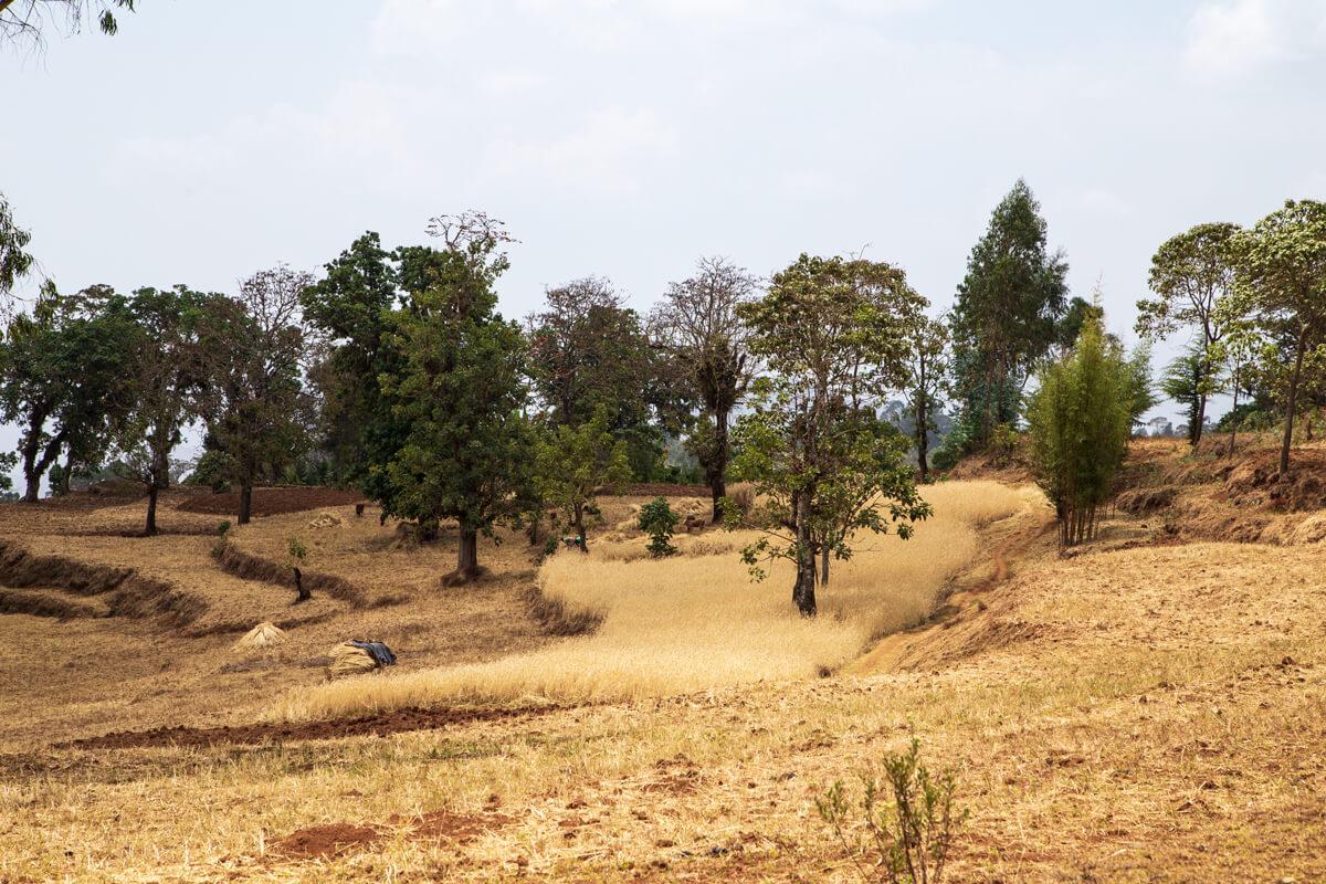 dorze-fields-landscape-ethiopia-adventuresinethiopia-