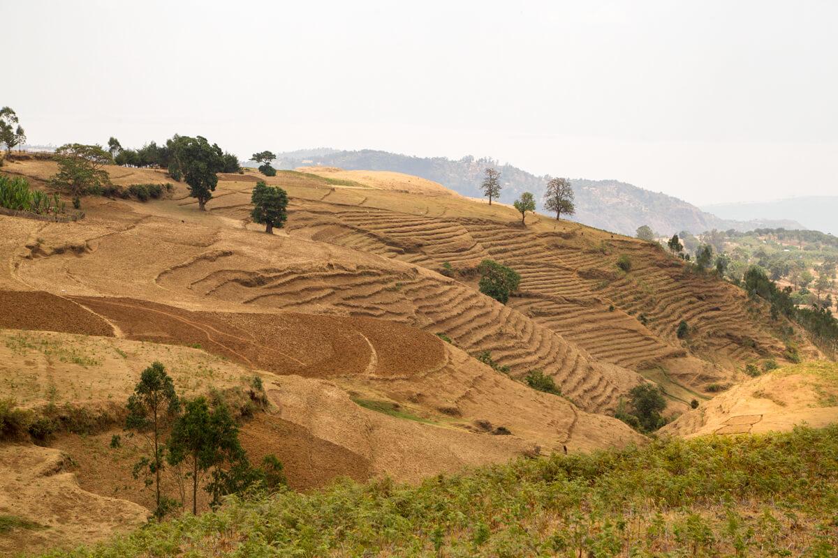 dorze-vilage-cereal-fields-treking-landscape-ethiopia-mountains-adventuresinethiopia