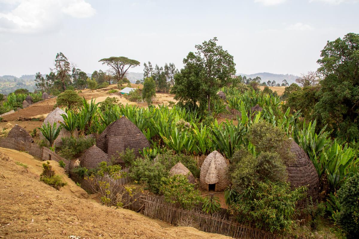 dorze-vilage-elephant-houses-muse-falsh-banana-enset-ethiopia-adventuresinethiopia