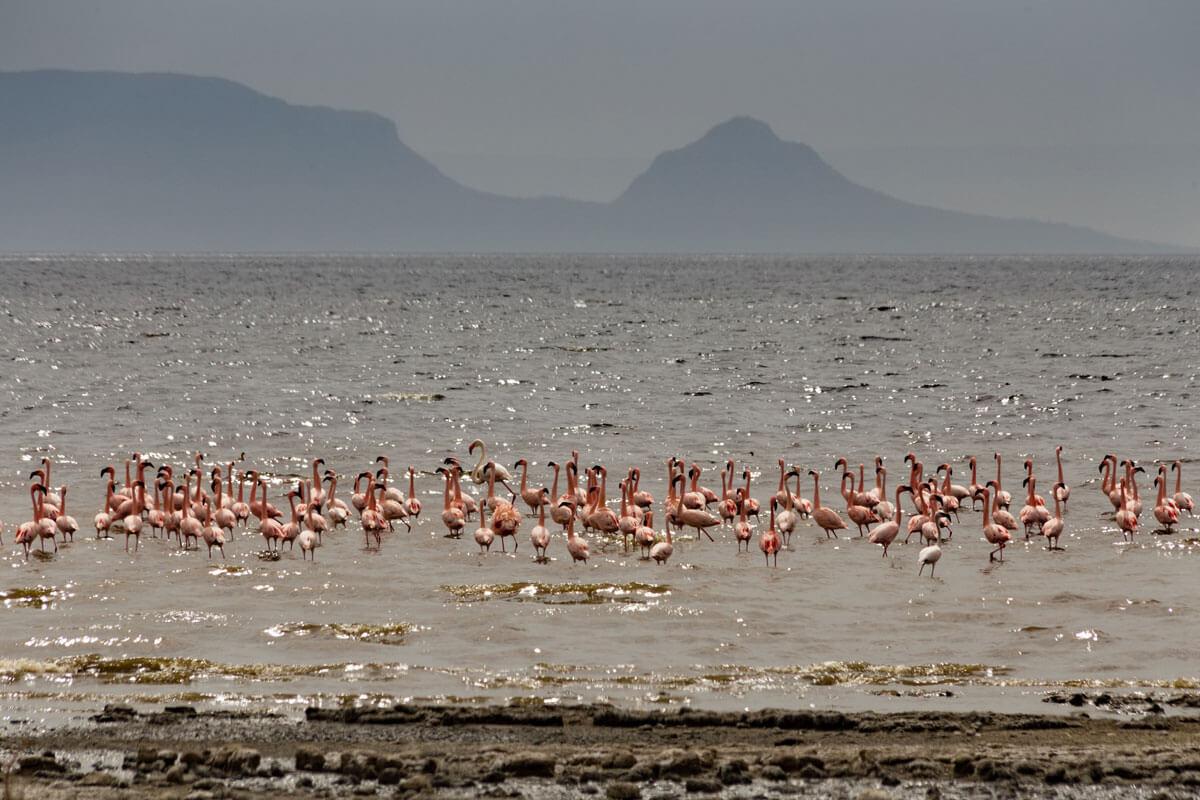 flamingo-abijata-shala-lake-nathional-park-ethiopia-adventuresinethiopia