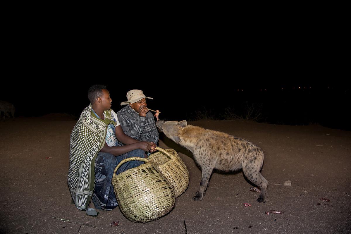 harar-hyena-feeding-meat-night-ethiopia-adventuresinethiopia
