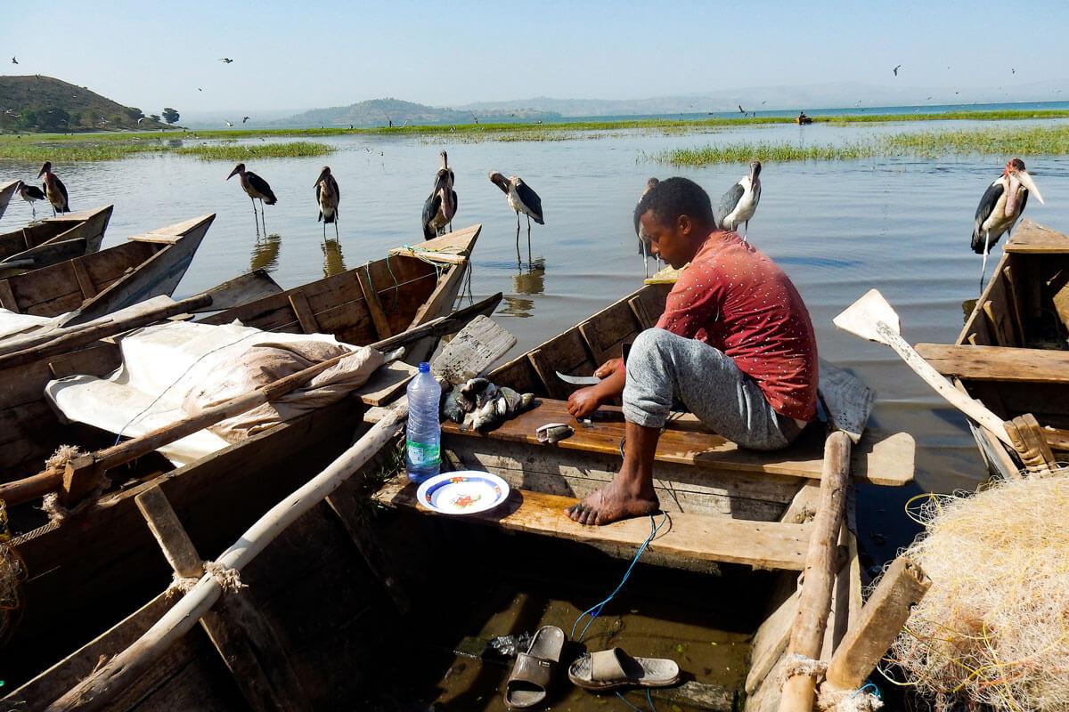 hawassa-fish-market-cat-marabu-stork-boats-fising-ethiopia-adventuresinethiopia