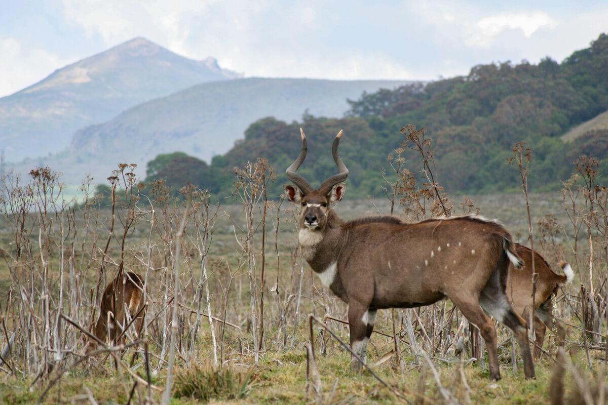 list-of-endemic-animals-of-ethiopia-adventuresinethiopia