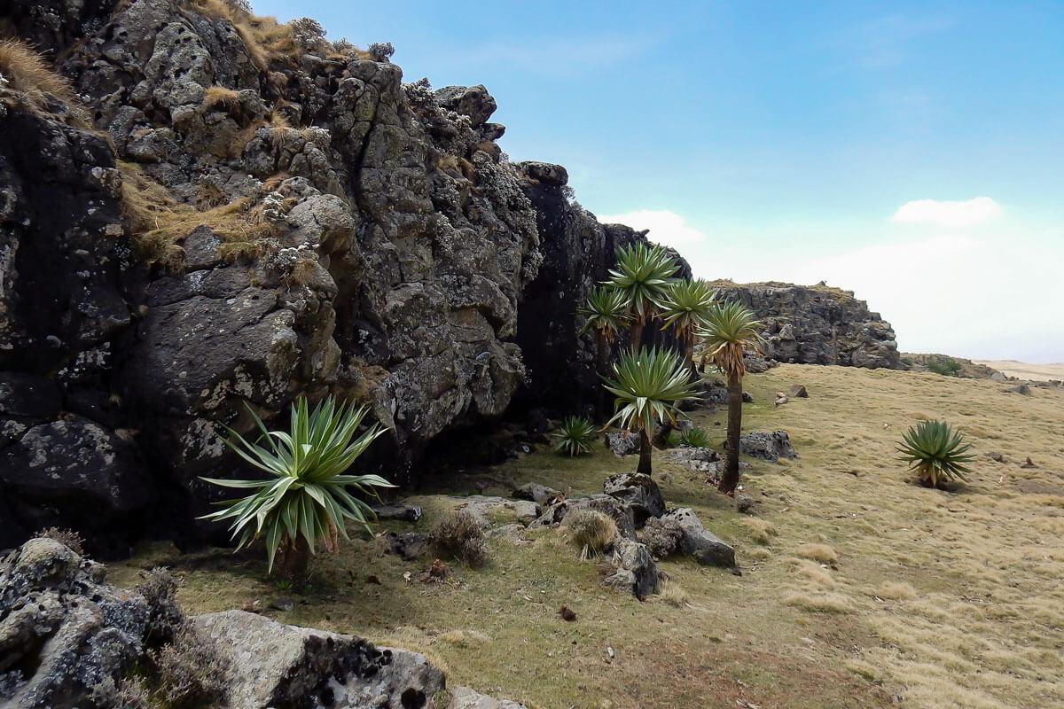 simien-mountain-national-park-treking-rasdashen-ethiopia-adventuresinethiopia