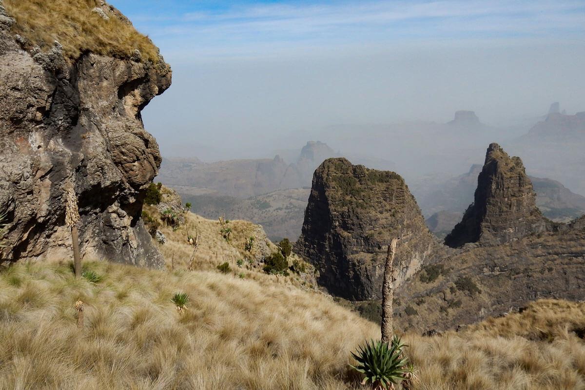 simiens-mountains-treking-rock-lobelia-ethiopia-adventuresinethiopia