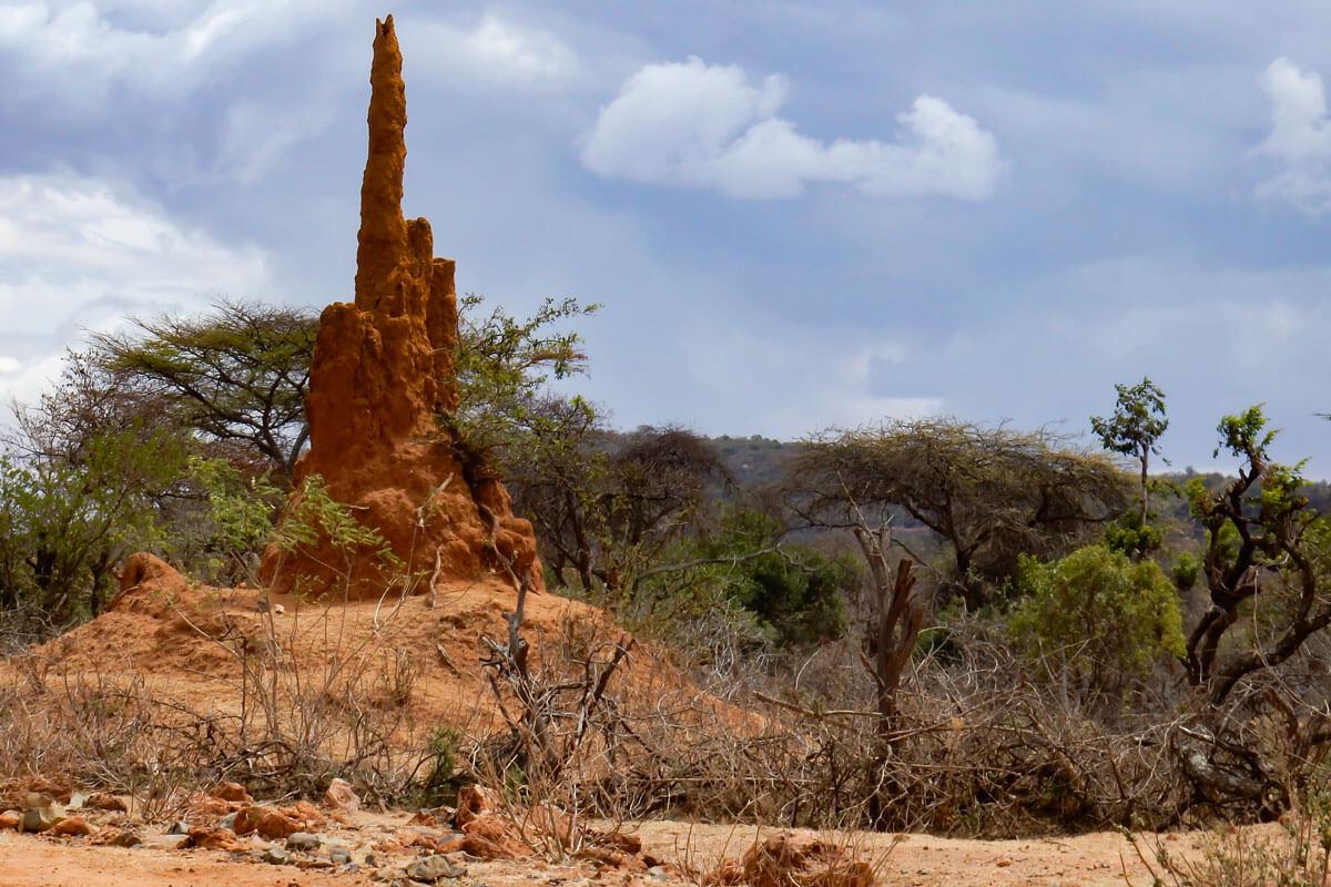termites-house-savanna-bushes-omo-valley-ethiopia-adventuresinethiopia