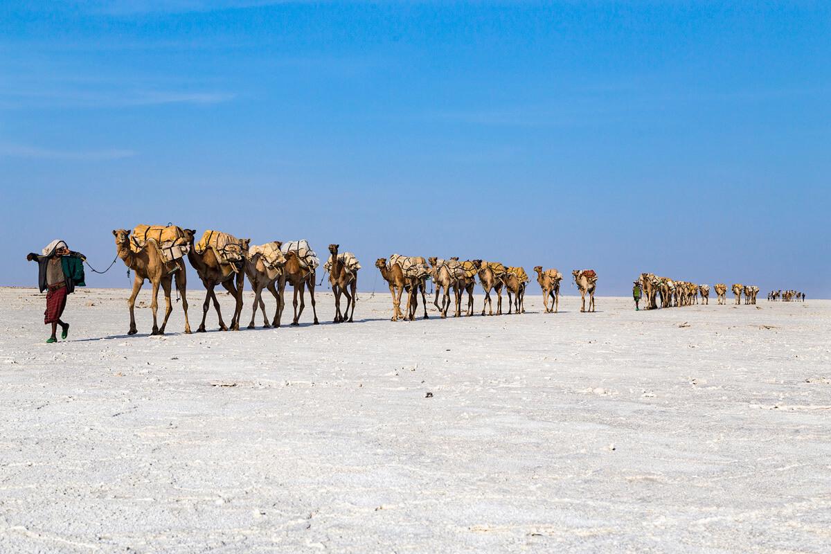 camel-caravan-salt-men-walking-hamadela-mekele-market-ethiopia-adventuresinethiopia