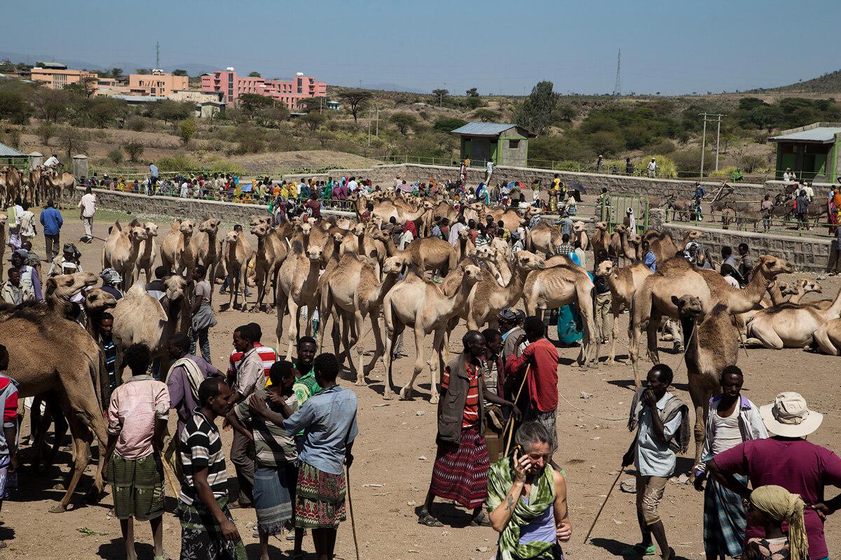 camel-market-babile-ethiopia-adventuresinethiopia