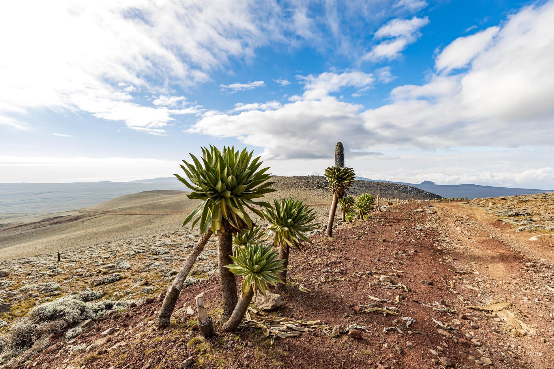 Ethiopia-travel-tour-adventure-Bale-mountains-landscape-sanetti plateu-Tulu Dimtu