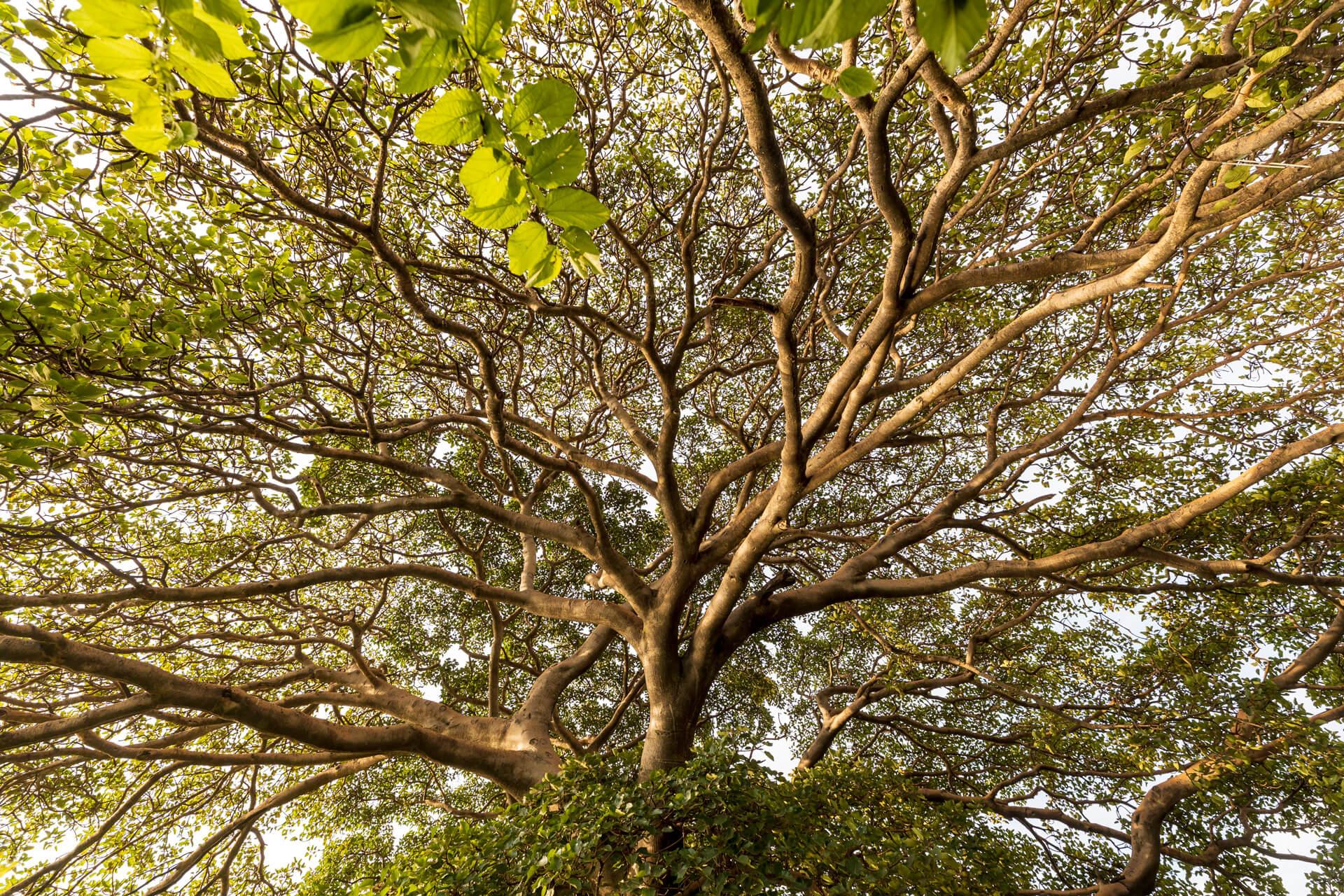 Ethiopia-Africa-trees-adventure-nature-landscape-Arba Minch