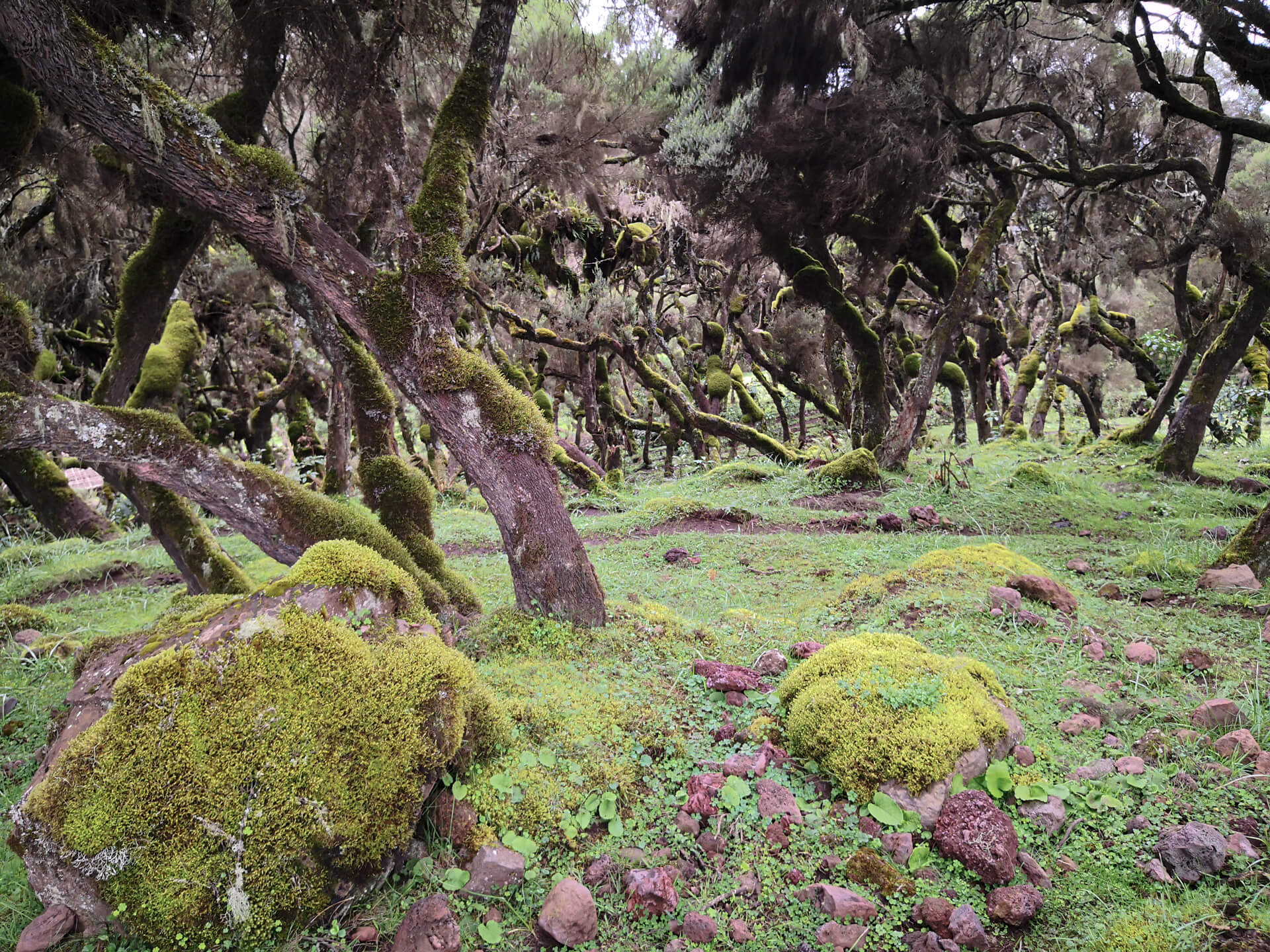 Ethiopia-traveling-tours-company-adventure-Bale mountain-Harena forest