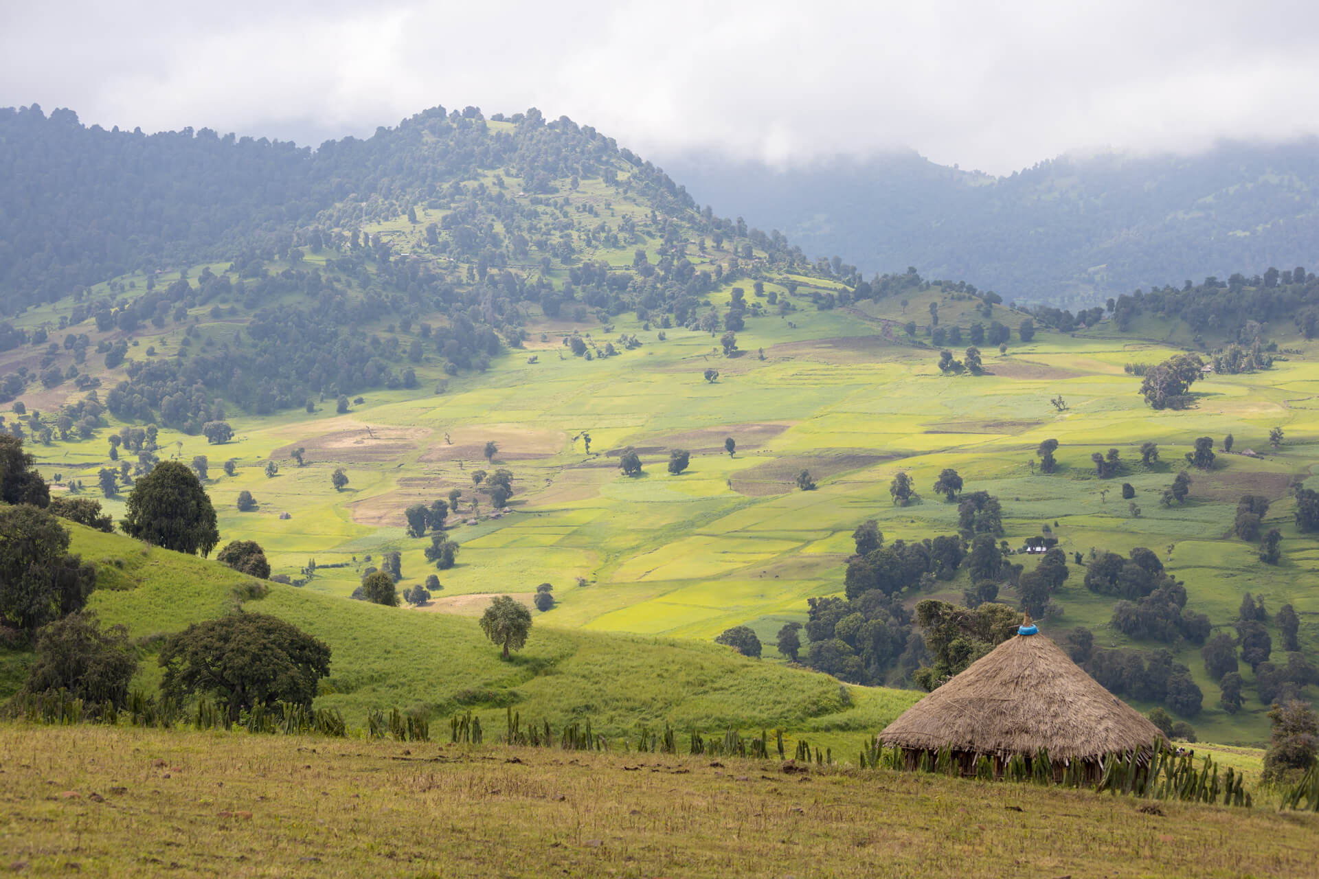 Ethiopia-traveling-Bale mountain NP-trip-adventuresinethiopia