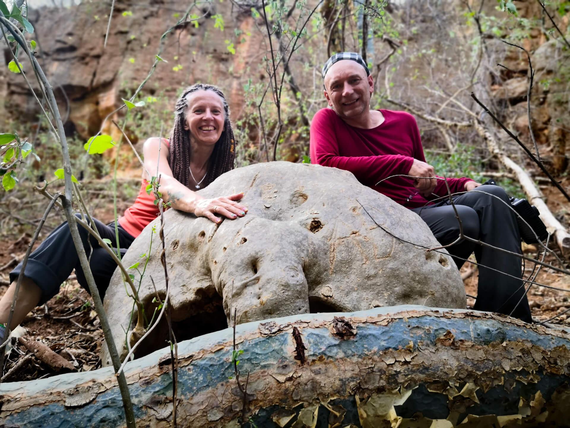 Ethiopia-Pyrenacantha malvifolia-plants-landscale-Sof Omar-caves-adventures-nature