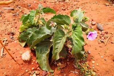 Ethiopia plants flora landscape