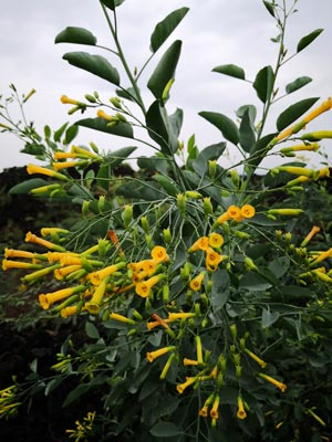 Ethiopia plants database flora landscape