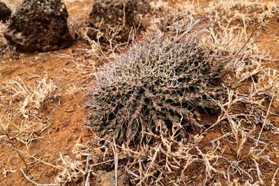Ethiopia flora plants landscape tropic