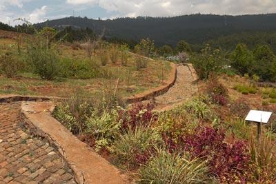Ethiopia Botanical Garden Gullele